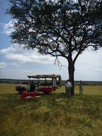 Serengeti Bushtops Camp : Picnic on the Serengeti.