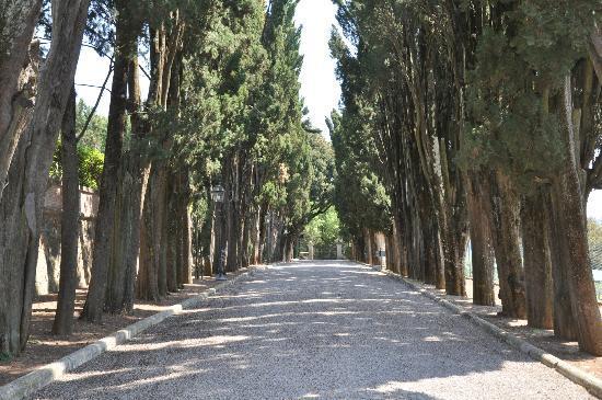 Villa Poggiano : Driveway
