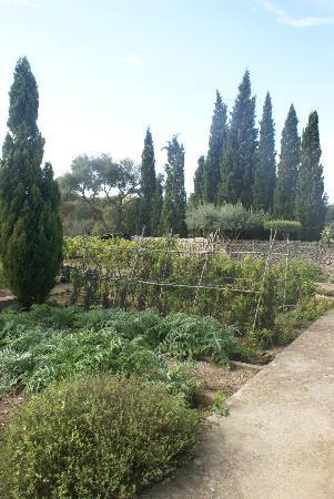 Possessio Binicomprat: Blick in den Gemüsegarten
