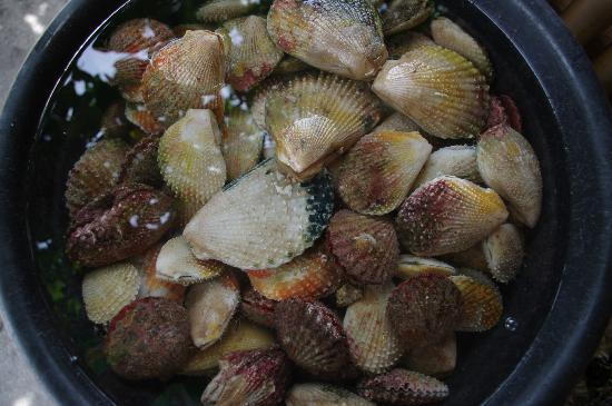 Delicious steamed scallops for P100, Canigao Island