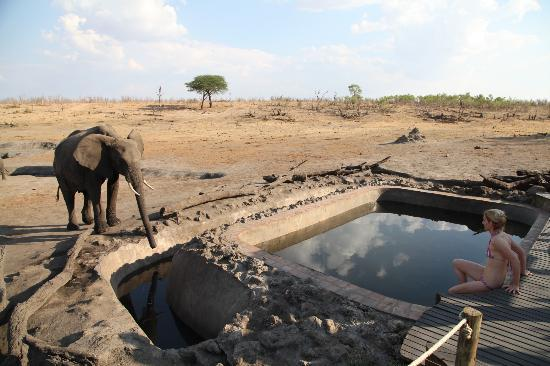 Somalisa Camp : On réalise un rêve