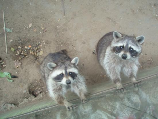 Debrecen Zoo and Botanical Garden : schattig