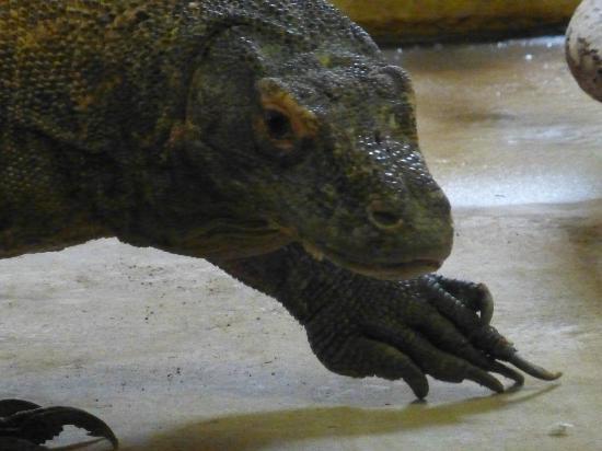 Debrecen Zoo and Botanical Garden : zelf oppassen