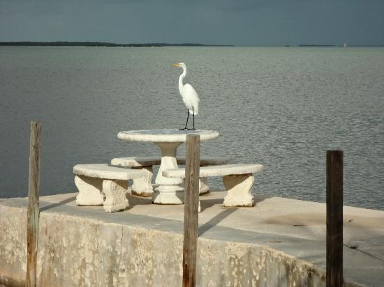 Rock Reef Resort: ALWAYS SOME BIRD OR ANIMAL ROAMING AROUND