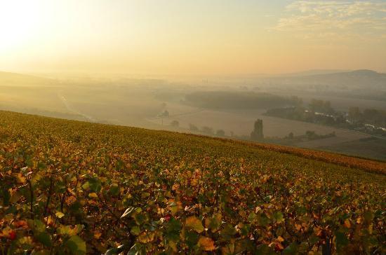 Le Chene Plat : Paysage d'automne en cChampagne