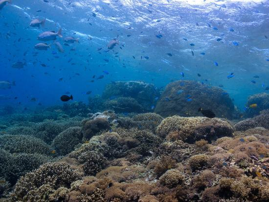 Diving In Gili Islands Review