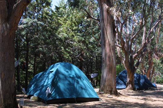 Saint Florent, France : Emplacement de camping