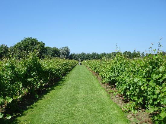 La Mare Wine Estate: Vineyard