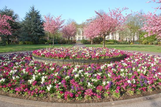 Cathays Park: ウェールズ国立戦争メモリアル碑と八重桜と桜草のビクトリア花壇