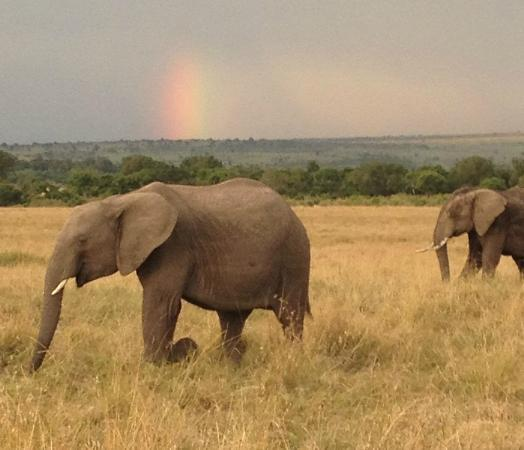andBeyond Kichwa Tembo Tented Camp: Rainbow and elephants…can't get better than this