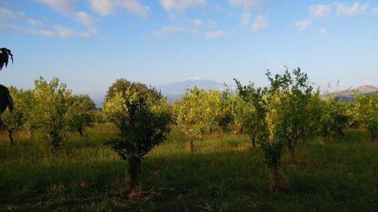 B&B Villa Maria Giovanna: L'Etna vista dal giardino