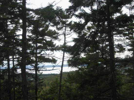 Holbrook Island Sanctuary : View from the top of Summit Trail