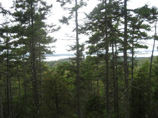 Holbrook Island Sanctuary: View from the top of Summit Trail