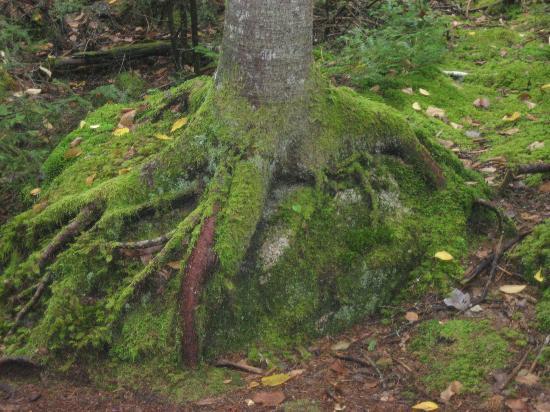 Barred Island Preserve: Vegetation