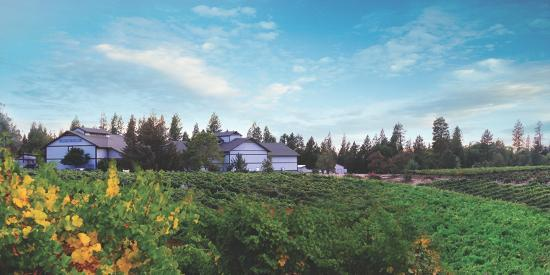 Placerville, Californien: Lava Cap Winery - West View