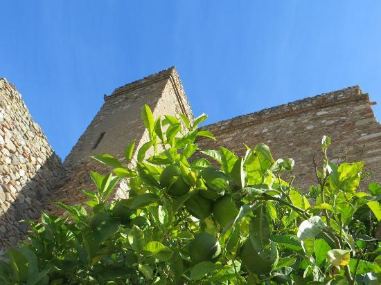 Alcazaba: Exteriour (tower and walls) with orange tree