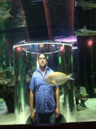 Restaurante Nais Aquarium