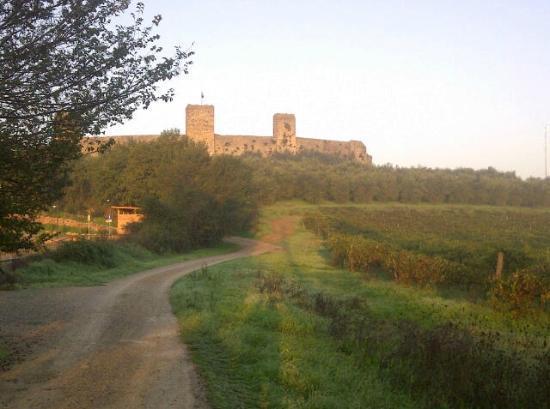 Hotel Monteriggioni: Old Tuscan vines