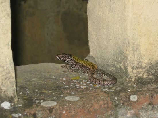 Frances' Lodge Relais: lizard