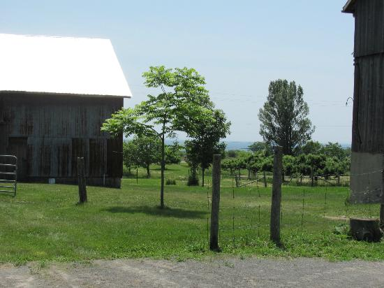 By Chadsey's Cairns Winery and Vineyard : View from the barn