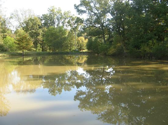 Meadow View Farm Bed and Breakfast: The pond.