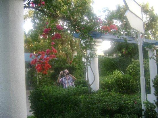 Filerimos Village Hotel: fleurs devant entree chambre