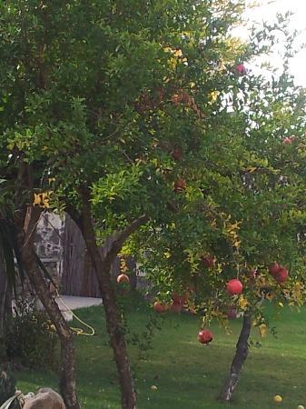 Hotel Maison Tresnuraghes: Garden Trees