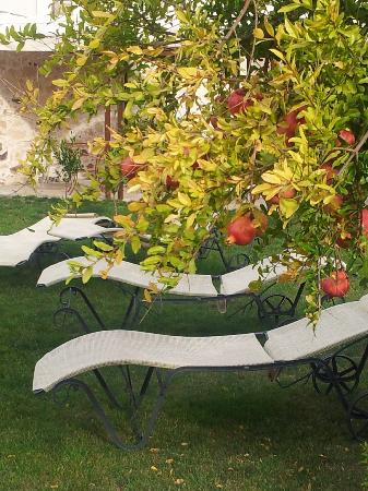 Hotel Maison Tresnuraghes: Sunloungers