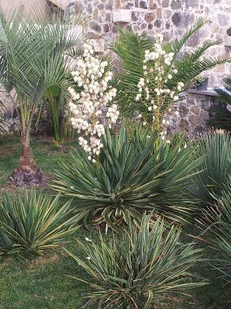 Hotel Maison Tresnuraghes: Garden Flowers