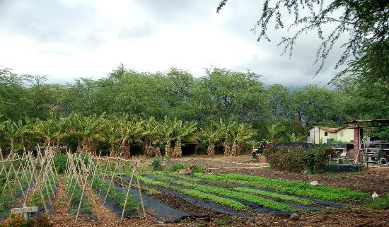 Kahumana Organic Farm & Cafe: Part of the Garden