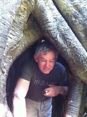 Southern Cross 4WD Tours: inside a strangler fig!