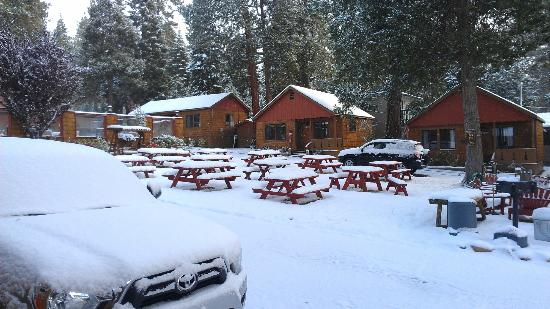 Cedar Glen Lodge: Couldn't beat the snowy view from our cabin.....