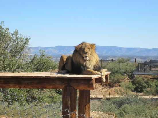 Out of africa coupons arizona