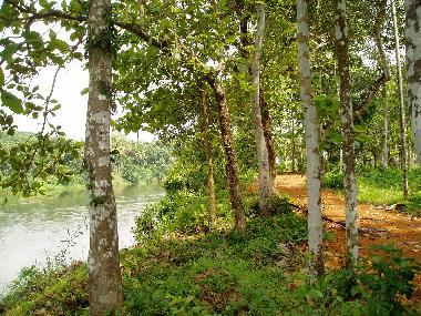 Muvattupuzha river side