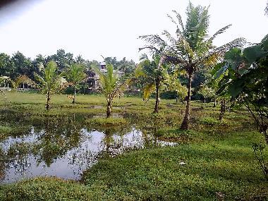 Coconut fields,Muvattupuzha