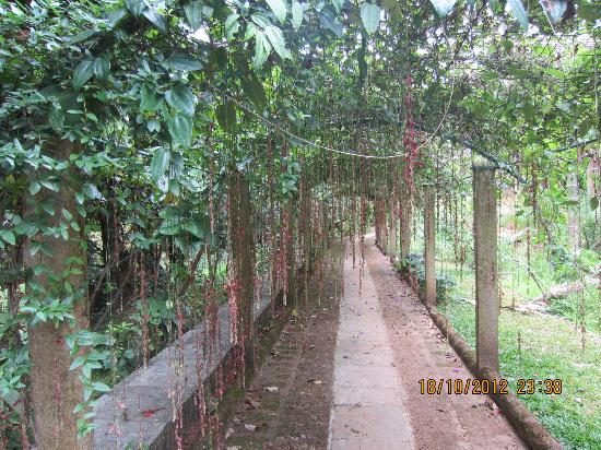 Wild Woods Spa and Resort: the pathway with overhanging flowers