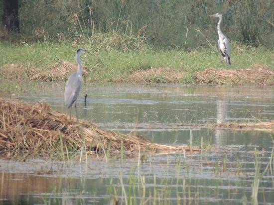 Sultanpur National Park Bird Sanctuary: birds