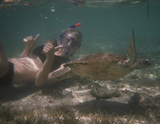 Green Island Resort: Having a snorkel with the turtles at green island. A lovely, rewarding day - Emily Jones