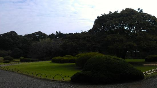 Shinjuku Gyoen National Garden : Lovely lawn near the Japanese garden