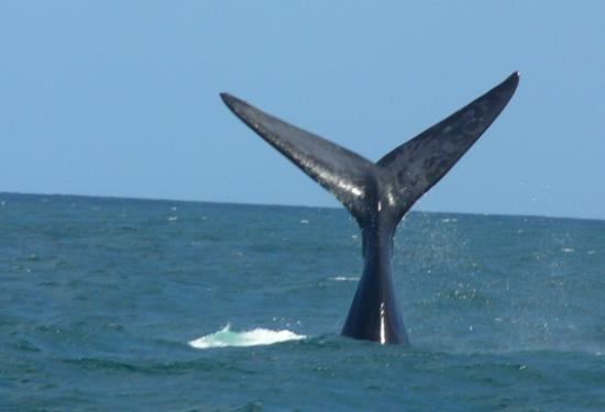 Ivanhoe Sea Safaris: It took this picture.. Promise