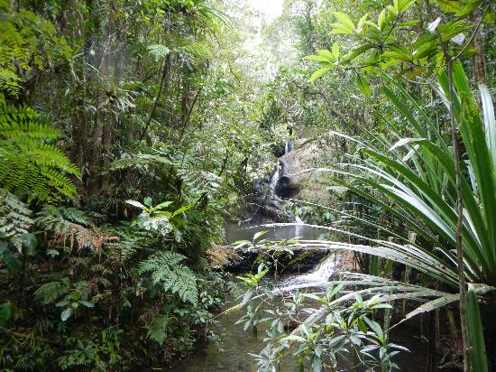 Colo-I-Suva Forest Park: walking through trails