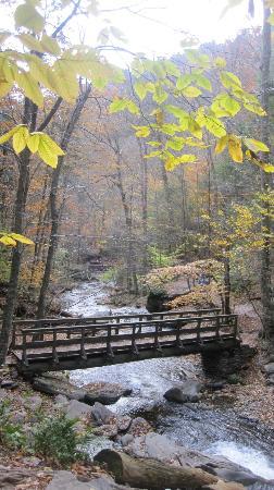 Mattress and Muffin Bed & Breakfast: Ricketts Glen State Park