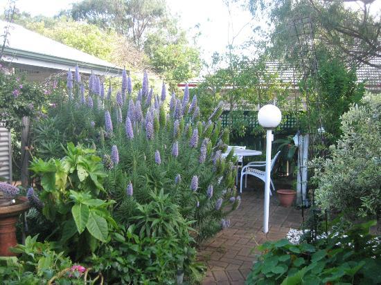 Jacaranda Guest House: Back garden