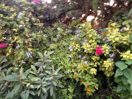 Pella Countryside Hotel: le jardin