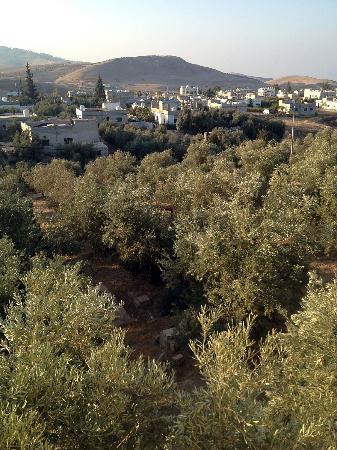 Pella Countryside Hotel: Vue de l'oliveraie depuis l'hôtel
