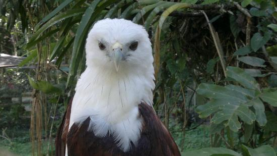 Philippine Eagle Centre: This little eagle is eager to be photographed