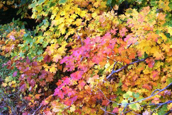 Woodloch Pines Resort : New England fall colors