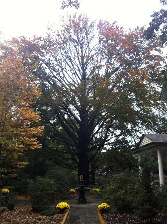 Wayne Bed & Breakfast Inn: Wonderful fall foliage