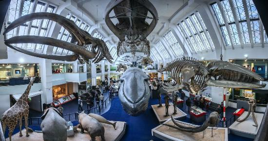 Museum Of Natural History Hours Free