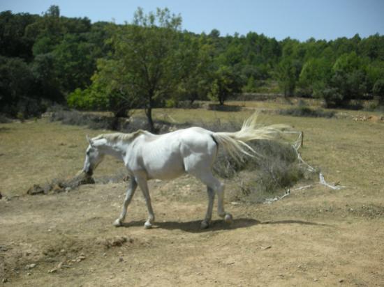 Mas de Madalena: El caballo Artax